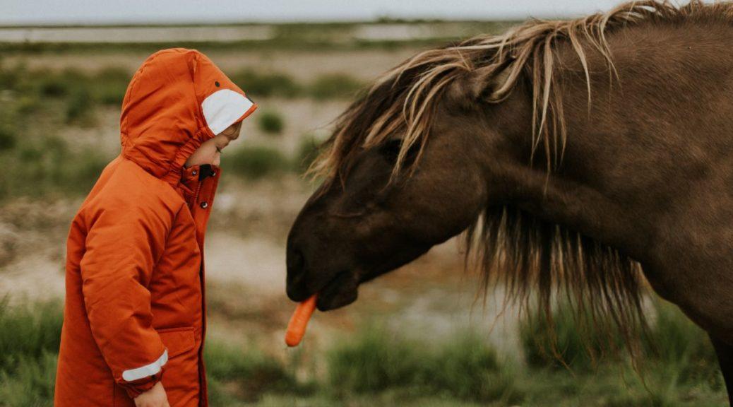 Chłopiec karmiący konia marchewką