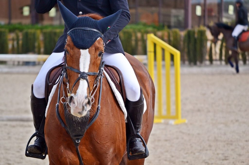 Jeździec na koniu - ujęcie z przodu
