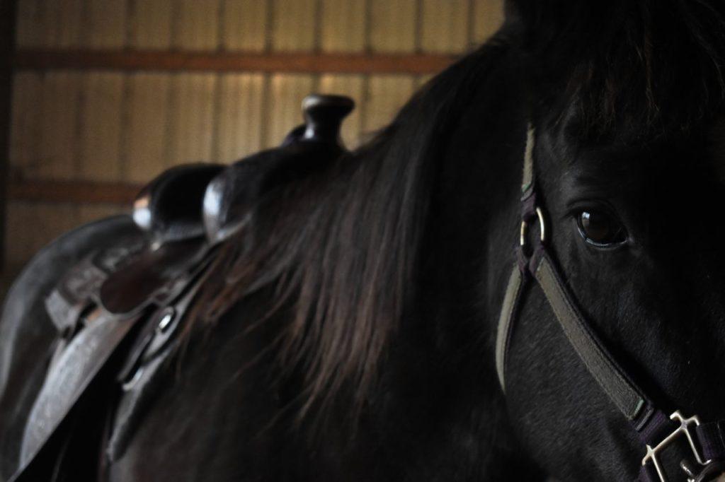 Czarny koń z siodłem