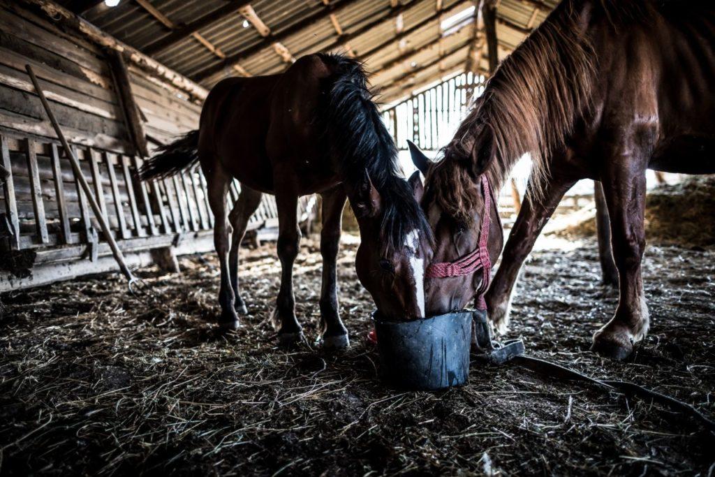 Jedzące konie