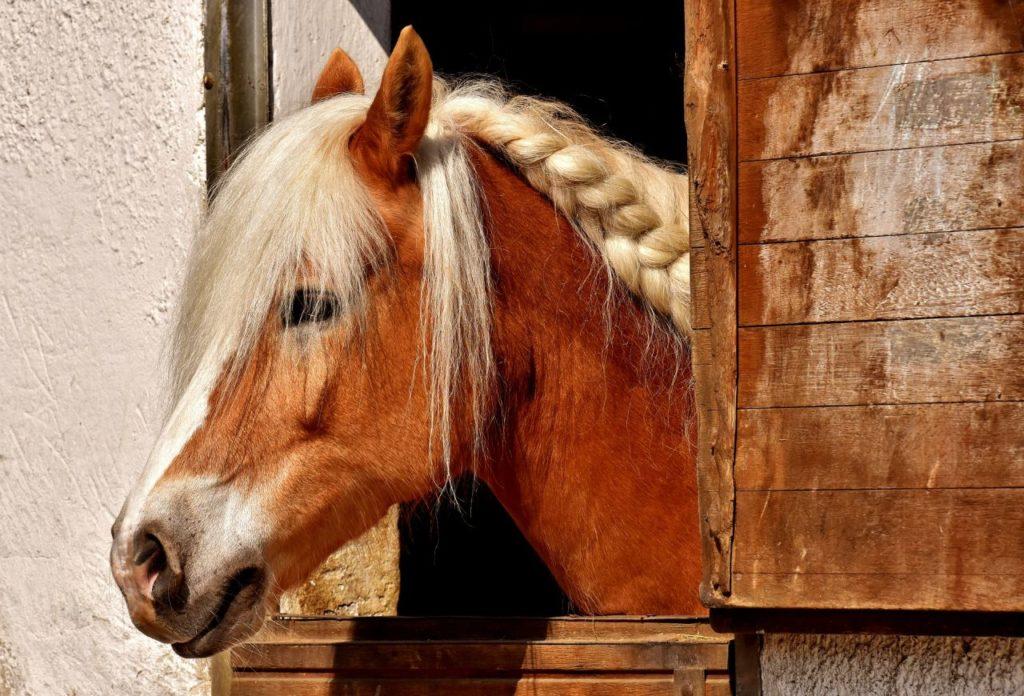 Koń w boksie