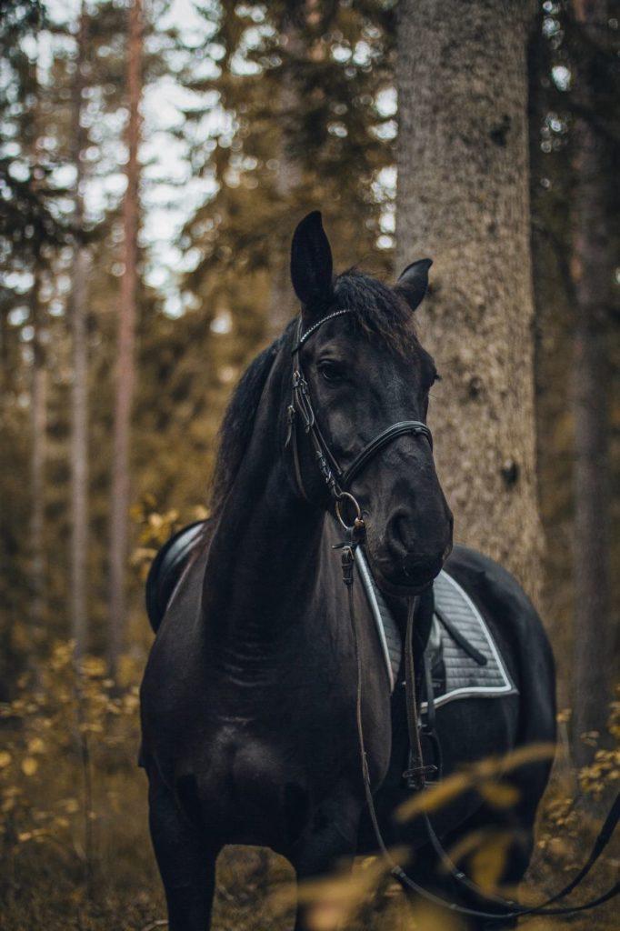 Koń w lesie