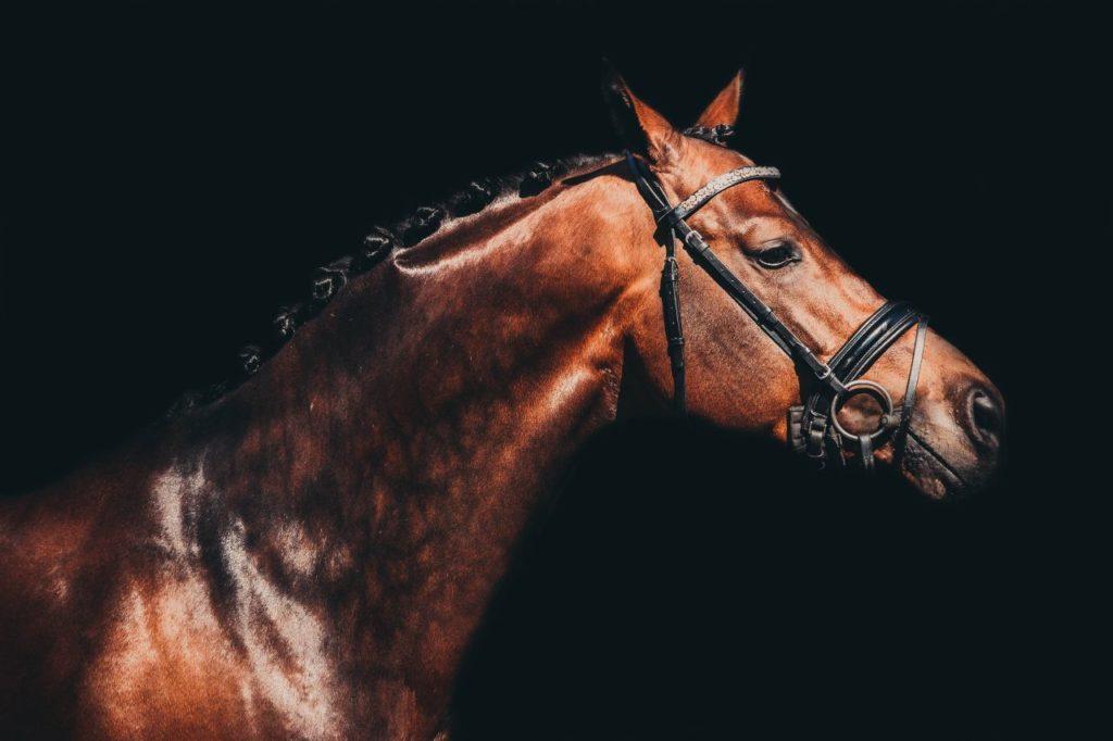 Koń w ogłowiu