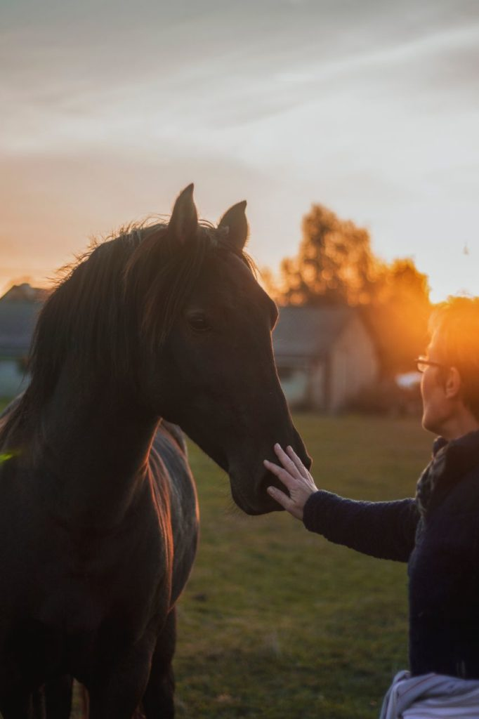 Koń z weterynarzem