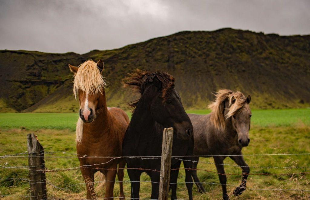 Konie z pięknymi grzywami