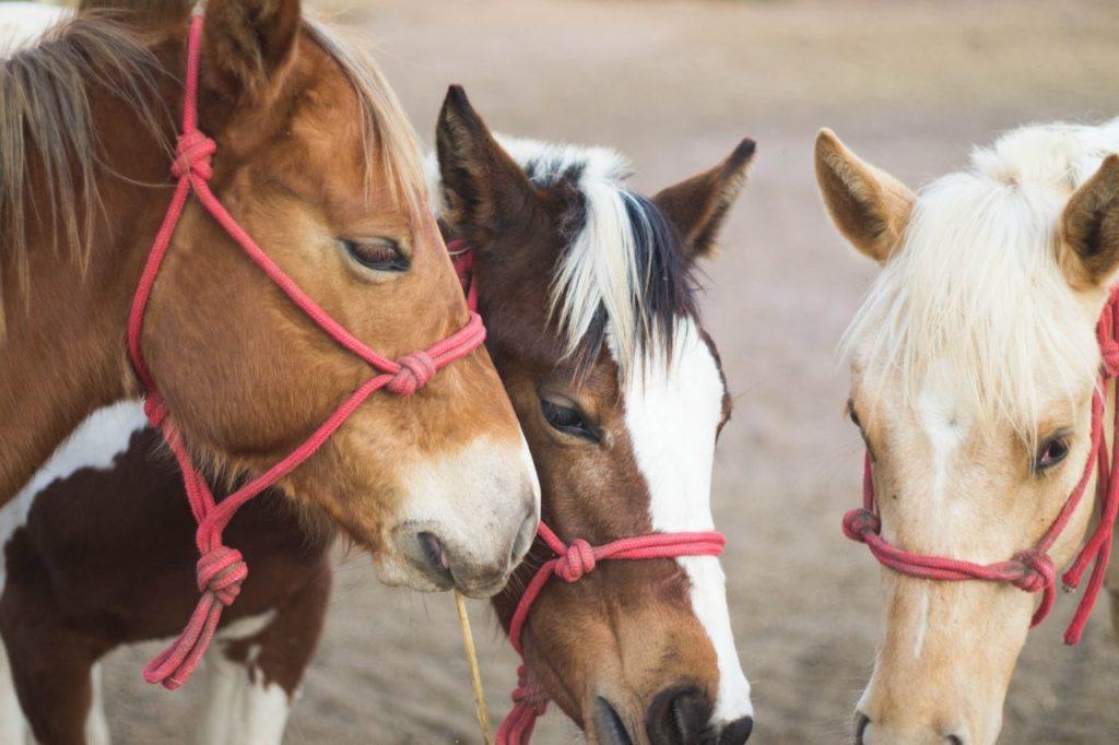Konie w kantarach