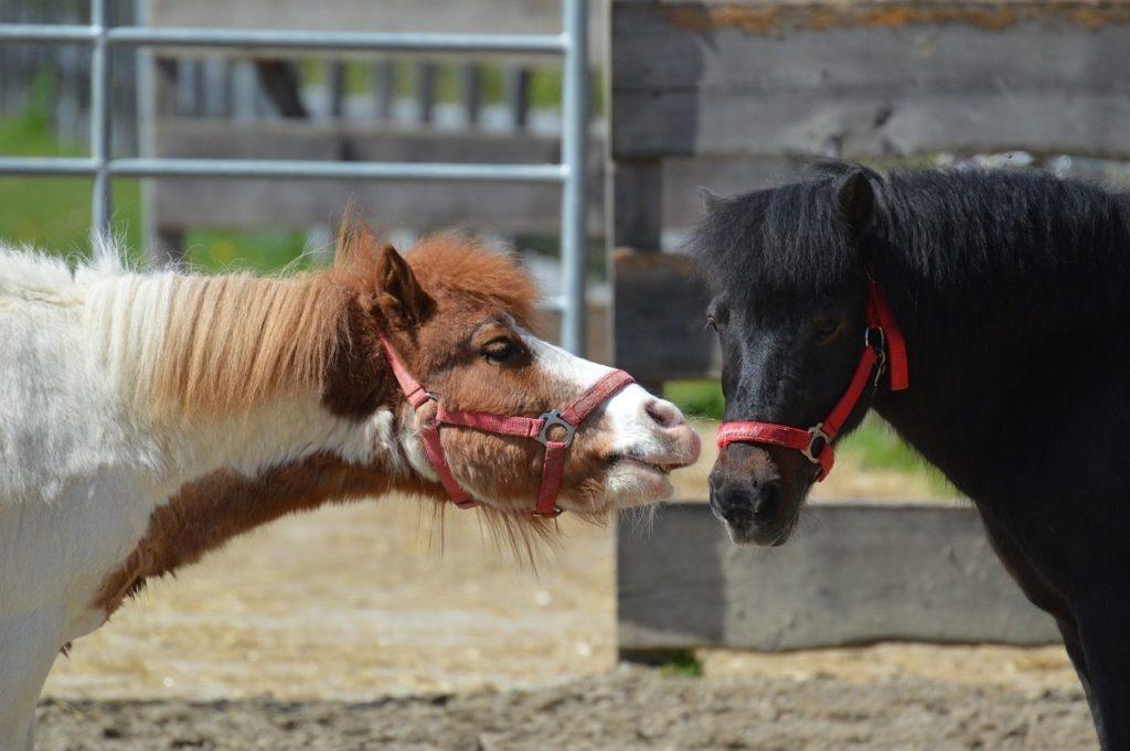 Małe konie