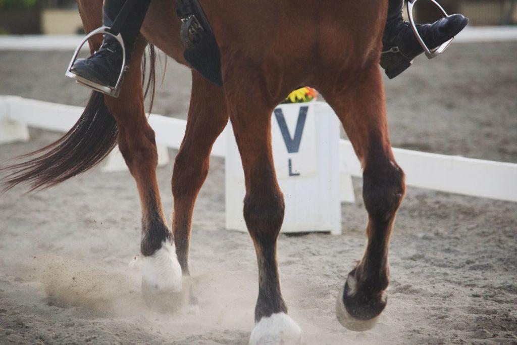 Nogi konia ujeżdżeniowego